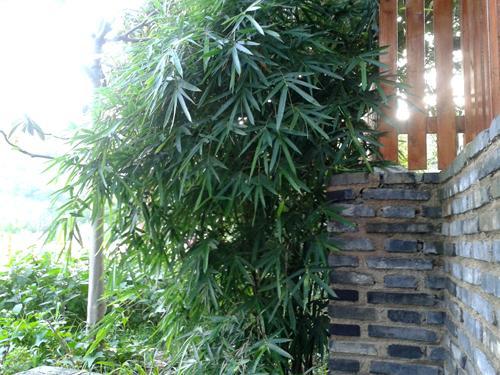 125平米欧式别墅小庭院
