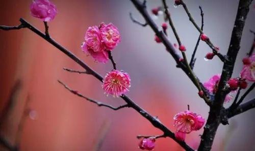 春雨丝丝润万物,梅花点点绣西山!